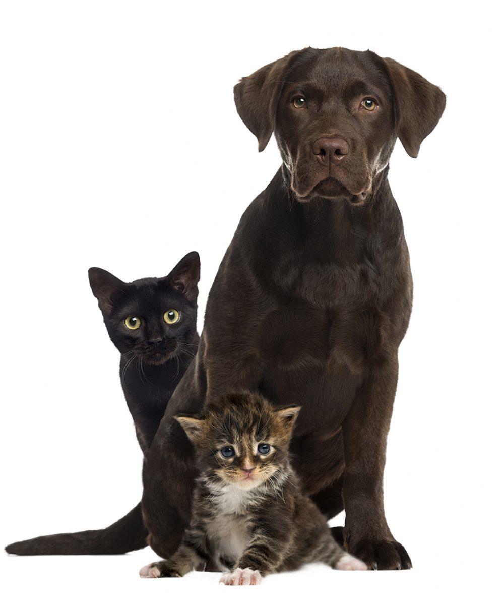Produits anti parasite chien chats CLCV Fandres Lys Estaires La Gorgue Merville